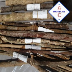 Palo Rompe  Saraguey - Es un palo fuerte del monte para limpiar y eliminar negatividades  tamaño +30 cm